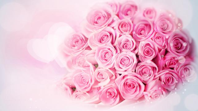 甜蜜粉色玫瑰