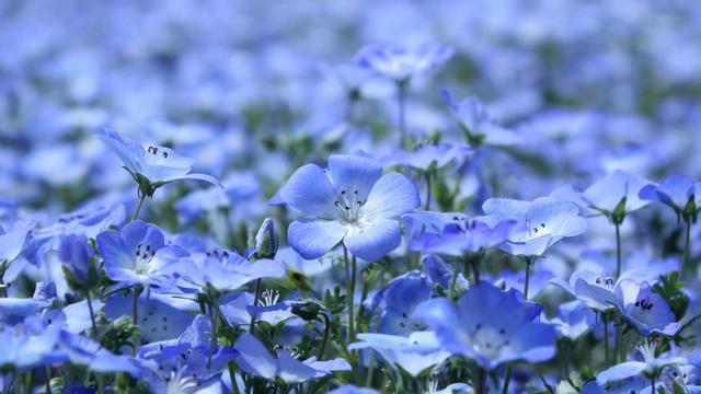 淡雅亚麻花