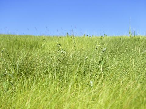绿色草地 第四篇