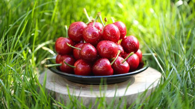 营养丰富的樱桃