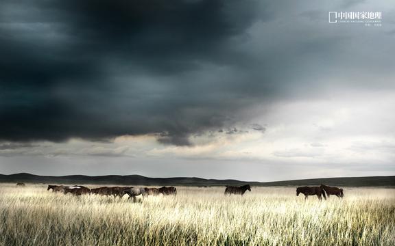 草食动物马