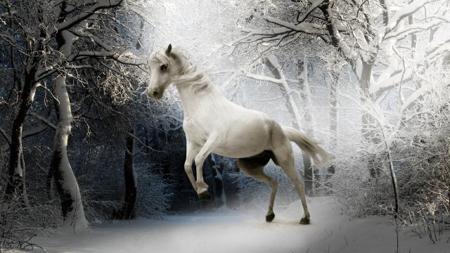唯美的白马