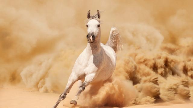 英俊潇洒的白马