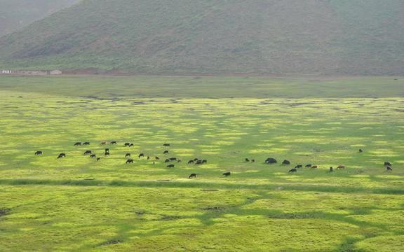 骑行在滇藏线之青青草场