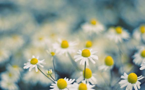 芬芳的花儿