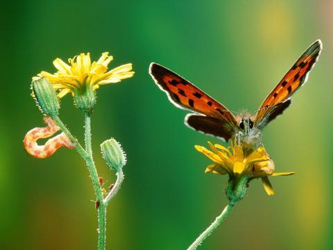 清新小蝴蝶壁纸