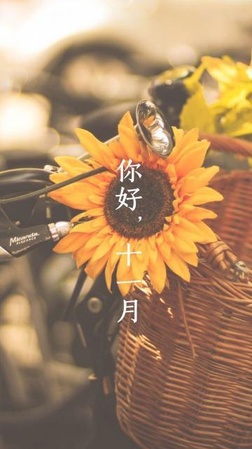 十一月你好/向日葵的祝福