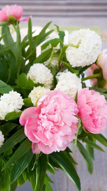 春暖花开——牡丹