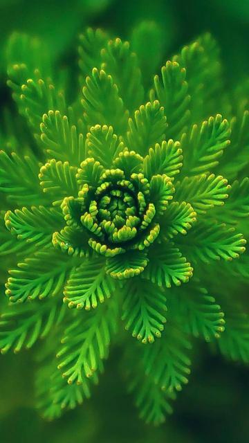 绿色的花儿