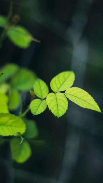 茂盛的绿叶