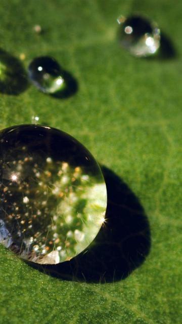 露水滴在绿叶上