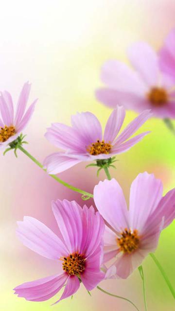 绽放最美的花韵