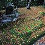 壁纸,高清,宽屏,树叶,红叶,枫叶,大自然