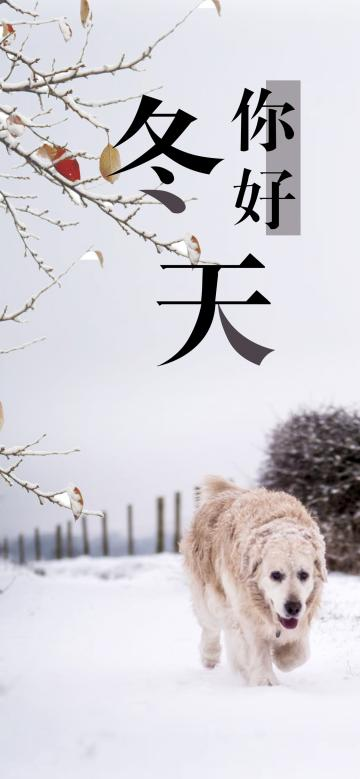 雪地里的金毛犬