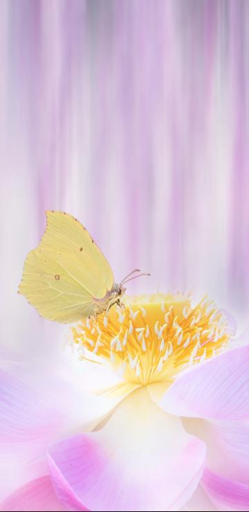 美丽的蝴蝶在花朵上