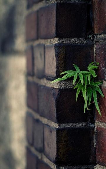 从墙缝里长出来的小草