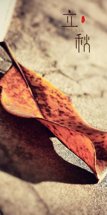 立秋之枯黄的落叶