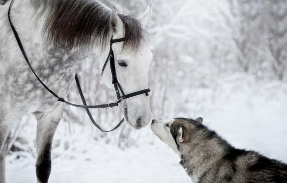 跨越物种的搞笑爱情