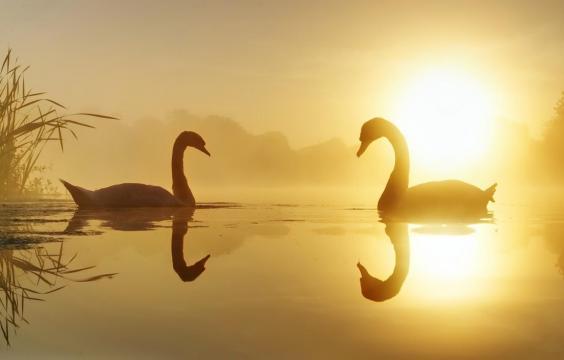 天鹅湖的唯美日落