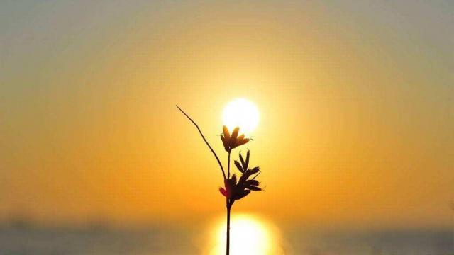 夕阳下盛开的花朵小清新唯美写真