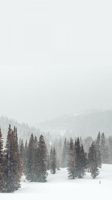 冬季里大自然的雪景风光