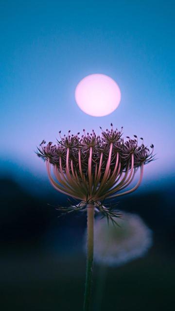 月光下的花花世界