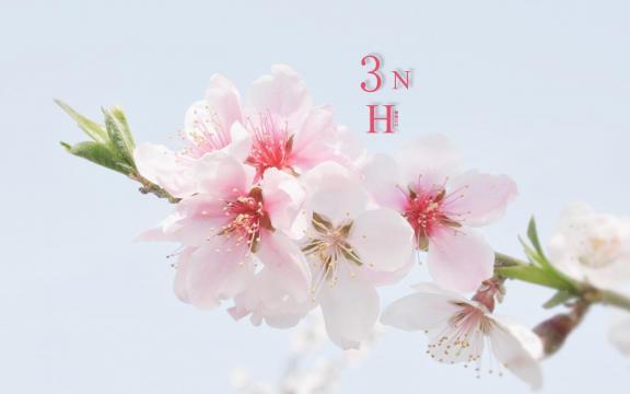 三月你好,桃花季